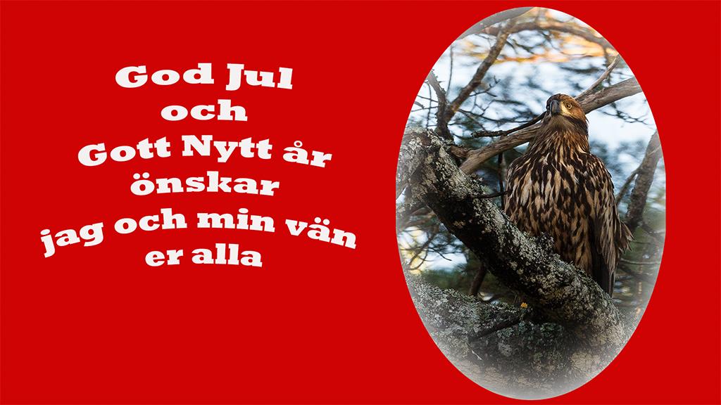 julkort_webb